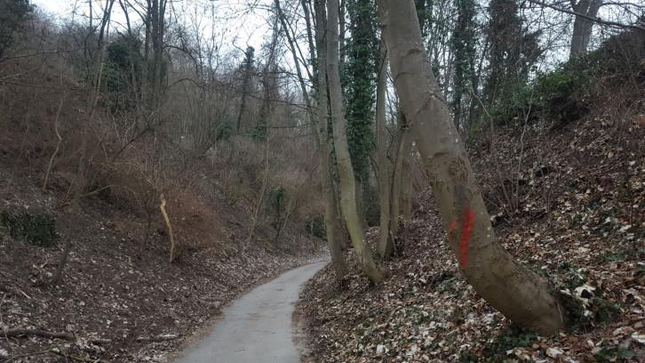 Für die Verkehrssicherheit durchforstet eine Spezialfirma vom 11. bis 15. Februar den Baumbestand an der Herrenberger Burgsteige.