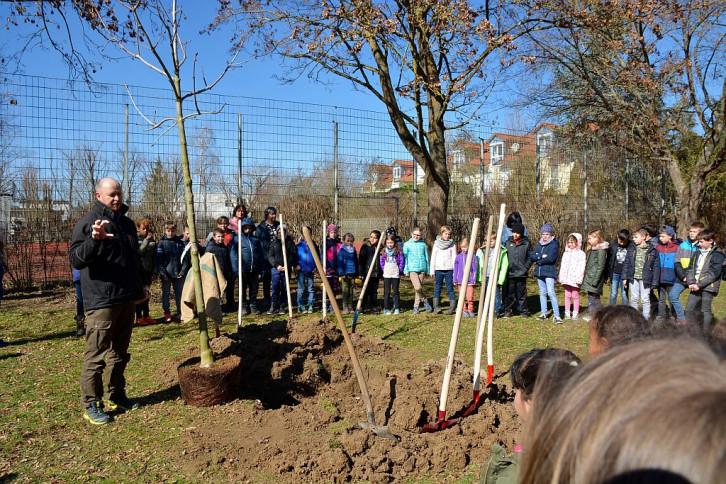 Jubiläumsbaum hinter der Gültsteiner Grundschule