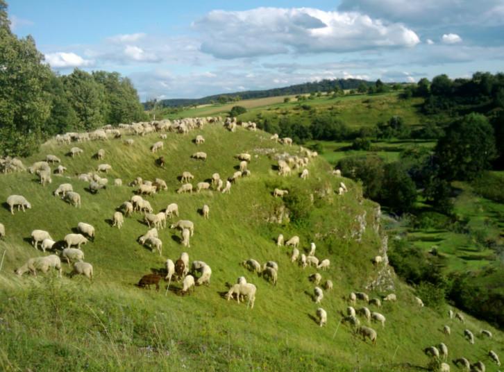 Landschaftspflege mit Biss