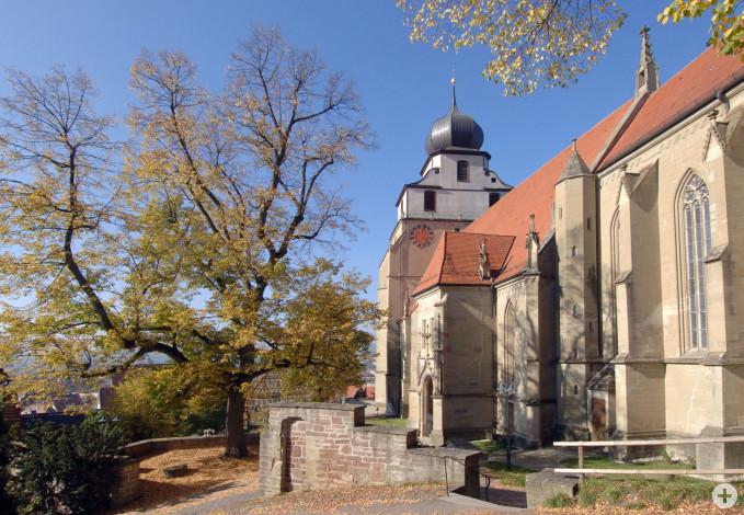 Herrenberg Stiftskirche mit Baum