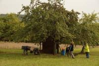 Apfelernte auf unserer Streuobstwiese