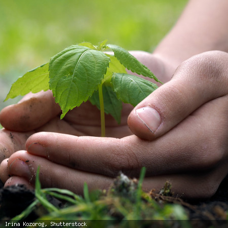 Klimaschutz - Bild: Irina Kozorog - Shutterstock