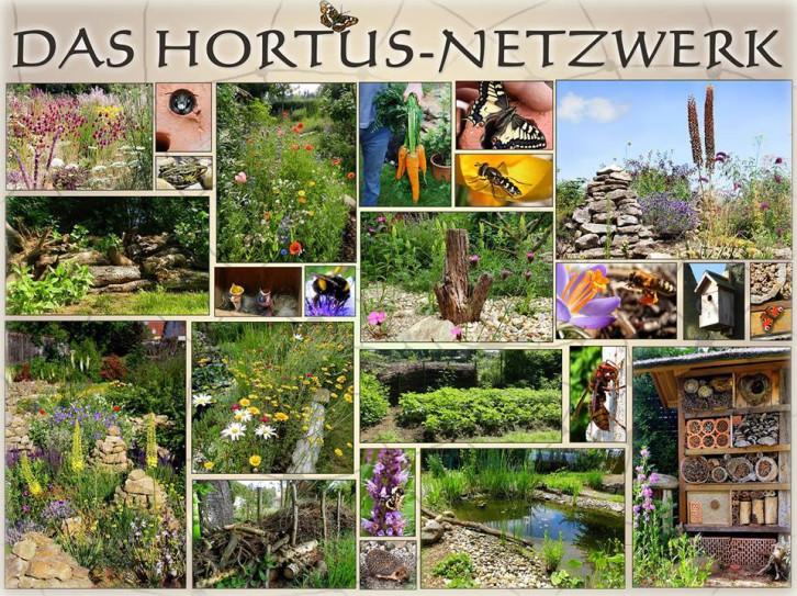 Das Hortus-Netzwerk.