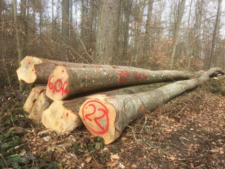 Brennholzpolter im Stadtwald