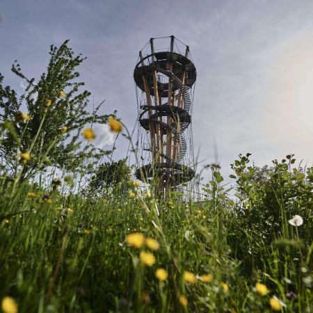 Schönbuchturm mit Wiese