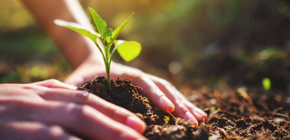 Pflänzchen wächst aus der Erde