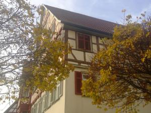 Interkulturelle Schreibwerkstatt: Bäume beim Rathaus