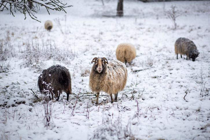 Gewinner-Foto #Weihnachtszeit in Herrenberg (Instagram) - Bild: Daniel Fleps