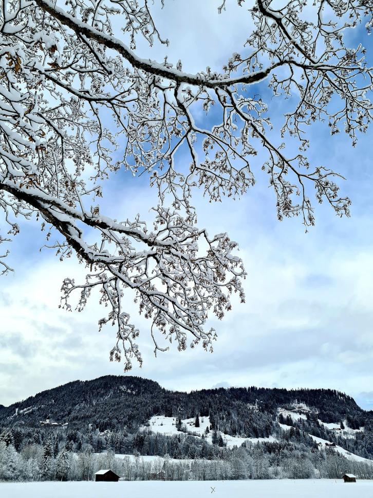Gewinner-Foto #Weihnachtszeit in Herrenberg (Facebook) - Bild: Dr. Jessica Steinbach